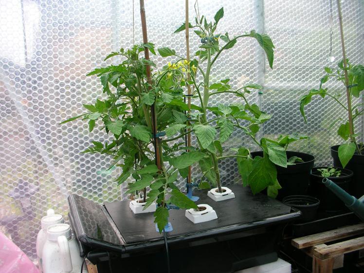 Greenhouse, hydroponic tank 2016