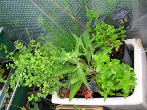 Herbs 1
