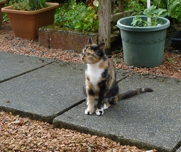 Lexy, Abandoned-rehomed