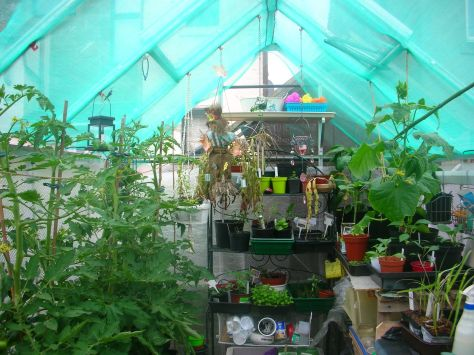 Shady greenhouse