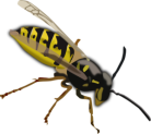 wasp-clip-art-wasp-md