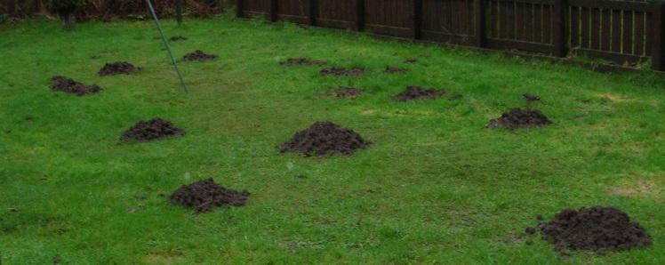 garden-moles-jan-2017