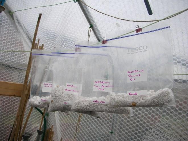 germinating bags
