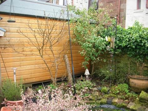 Magnolia and Photinia