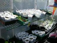 Seedlings 2 Apr 2017