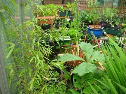 Garden, bamboo