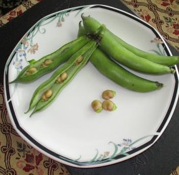 Karmazyn beans