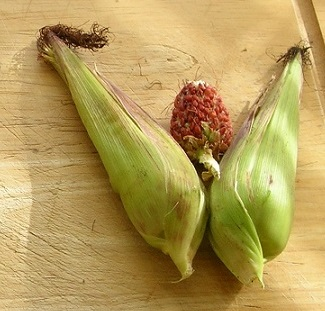 sweet corn c