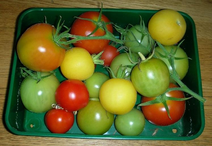 tomato left overs