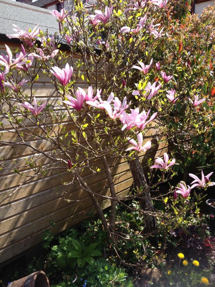 Magnolia Apr 2019