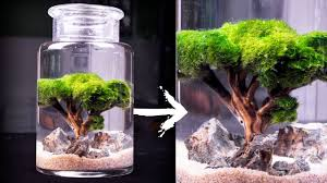 moss ball tree