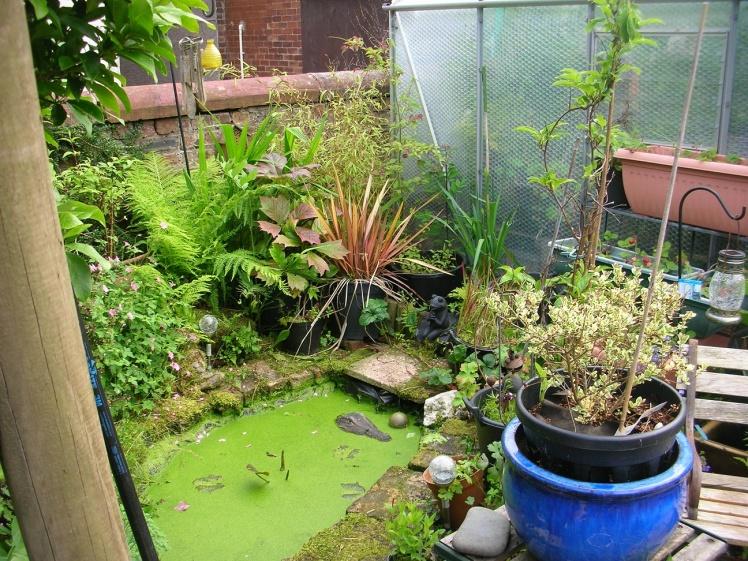 Garden jungle 2020